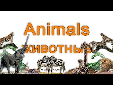 Животные на английском языке.  English Vocabulary - Animals