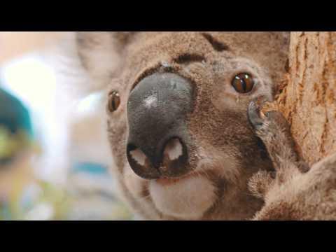 Take a tour of the Australia Zoo Wildlife Hospital!