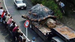 Rùa Thần - Giant tortoise (2018) - Phim Khoa học viễn tưởng