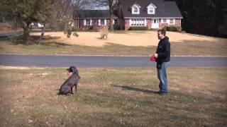 Dog Training By The Canine Training Center- Board And Train.mp4