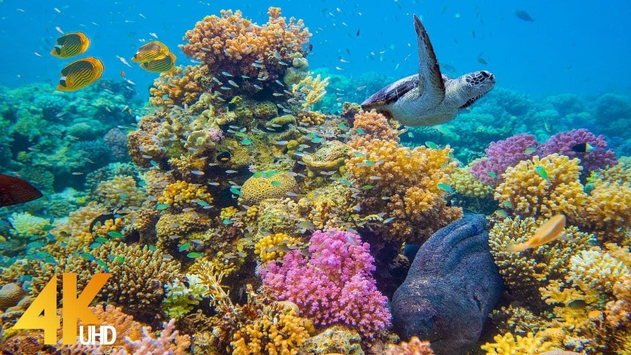 4K Stunning Underwater Wonders of the Red Sea - Colorful Coral Reef Inhabitants - 3 HOUR