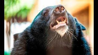 Собака получила 26 ран, спасая хозяйку от медведя
