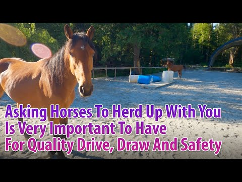 Asking Horses To Herd Up With You Is Very Important To Have Quality Drive, Draw And Safety!