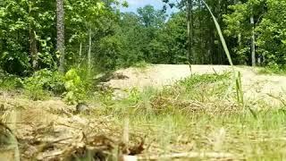 Jumping at Pocahontas State Park thumbnail