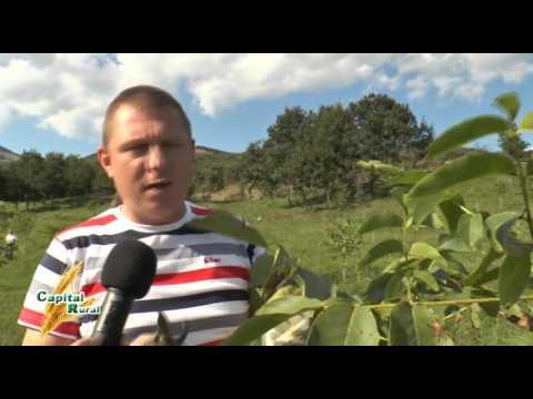 Capital Rural -