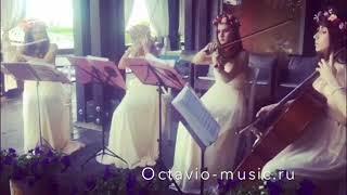 Квартет на свадьбу. Dстреча гостей  Titanium Sia cover