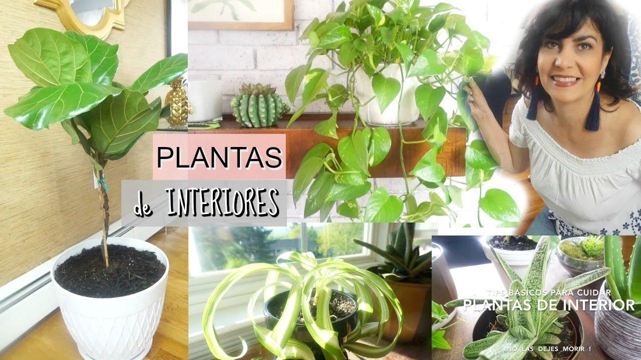 Plantas De Interior Tips Basicos Para Cuidarlas No Las Dejes Morir Youtube