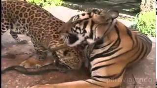 ТОП 10 Дружба Разных Животных