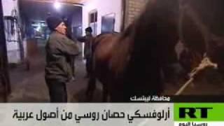أورلوفسكي.. حصان روسي من أصول عربية