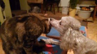 Кот и собака cat and dog