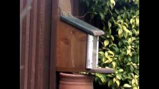Squirrel Feeder Box Squatter