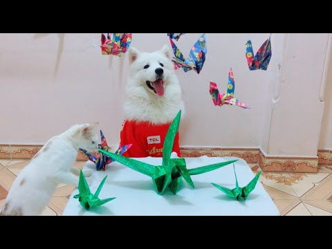 Cute dog VS Paper Cranes - Latest Funny dog and cat videos