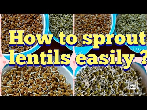 How to sprout lentils easily !!!