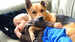 Best Of Cats And Dogs Protecting Babies 2016 || NEW HD