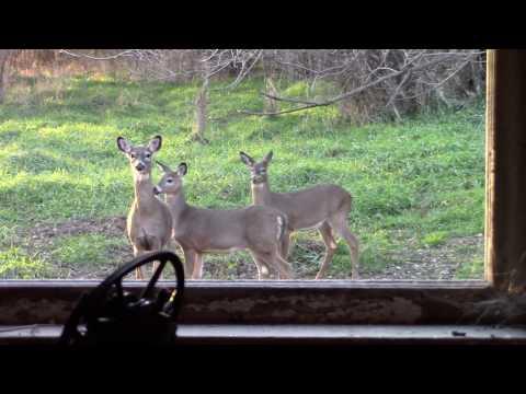double deer kill girlfriends first deer Iowa 2016