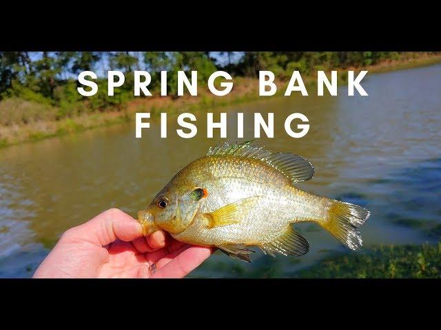 Bank Fishing for Bass (Redear Sunfish) at Lake Holcomb