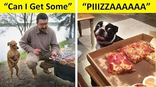 Funny Photos Of Dogs Begging For Food That You Just Can't Say No To
