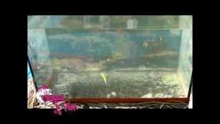 Силиконовая приманка Crazy Fish Polaris джавастик(http://www.fishing-mart.com.ua/1168-crazy-fish-polaris-45-sm-8-scht.html POLARIS -- одна из лучших пассивных приманок! Благодаря геометрии тела..., 2013-03-16T20:58:42.000Z)