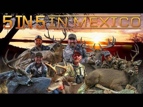 Giant Coues Whitetail - 5 In 5 In Mexico