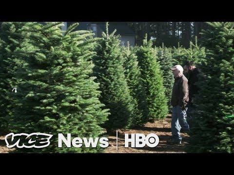 Paris's Last Porno & The Christmas Tree Shortage: VICE News Tonight Full Episode (HBO)