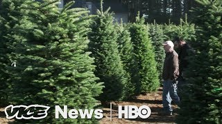 Paris's Last Porno & The Christmas Tree Shortage: VICE News Tonight Full Episode (HBO)