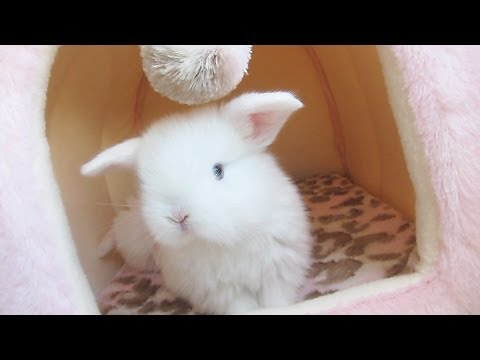 Baby Bunny PLAY TIME!