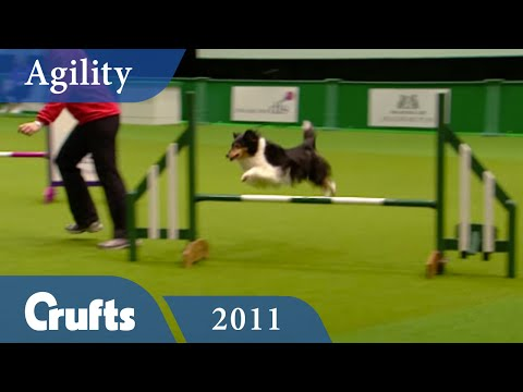 Agility - British Open Jumping 2011 | Crufts Dog Show