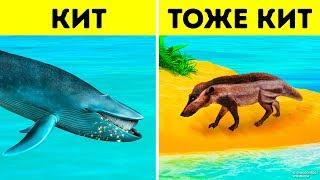 Почему киты - самые большие животные всех времен