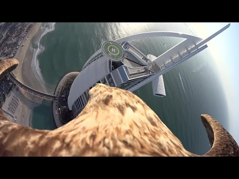 Flying eagle point of view #8 (Overflying The Burj Al Arab in Dubai)