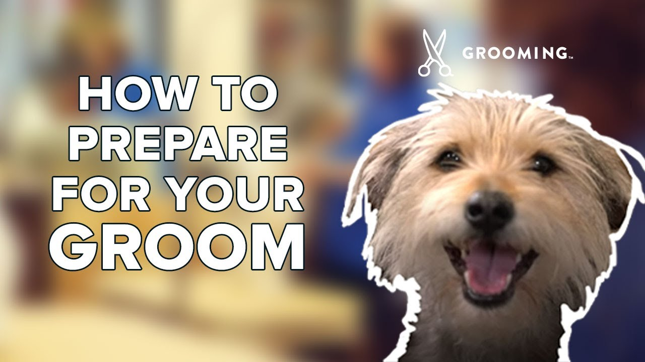 Dog Grooming Cat Grooming Services Petsmart