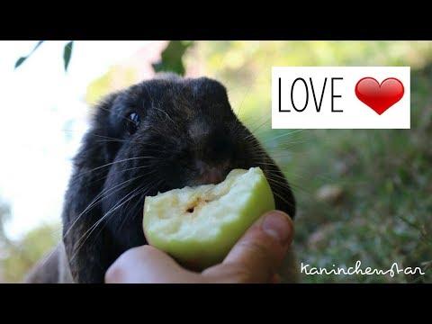 LOVE ❤   Kaninchenstar