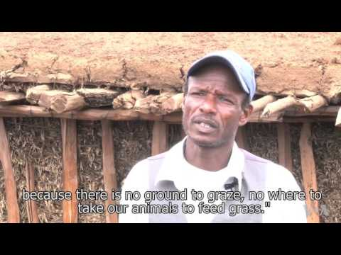 Kenyan Herders Embrace Drought-resistant Trees