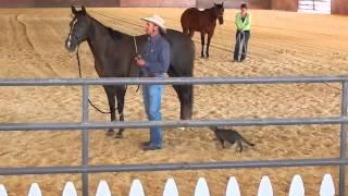Crazy Cat Attacks Horse