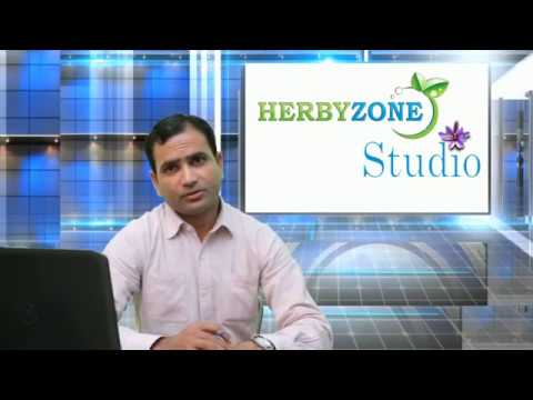 Moringa Fodder Cultivation Guide by Herbyzone Studio 0333-4120090, 0300-0997462