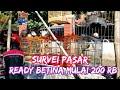 Cek Harga Kenari Terbaru  Pasar Burung Gawok Sukoharjo Jawa Tengah  Mp3 - Mp4 Download