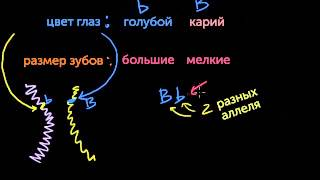 видео Основные генетические понятия: аллель, генотип и фенотип