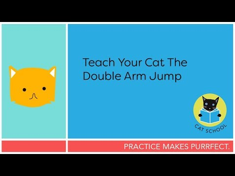 Easy Cat Trick: Teach Your Cat The Double Arm Jump With Clicker Training