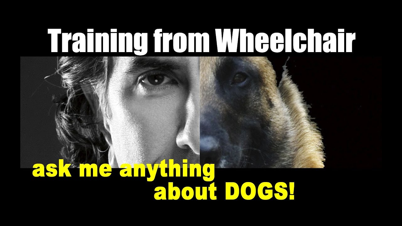 How to Train a Dog from a Wheelchair - Dog Training Video - ask me anything