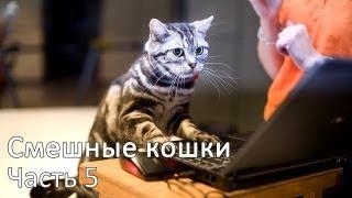 Смешные коты и кошки - видео приколы с кошками #5