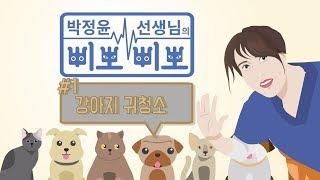 강아지 귀 청소 방법 [박정윤의 '멍냥 삐뽀삐뽀' #1]