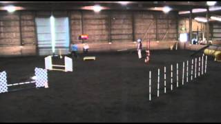 Ruby's 5th Agility Trial - Open Standard