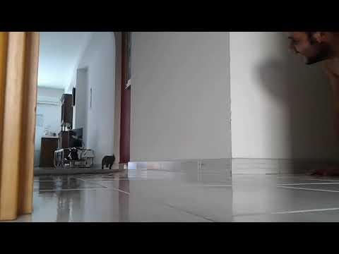 Ninja cat attack !!