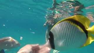 Sunrise Royal Makadi Resort 5*. GO PRO video. HD 720(Пробное видео снятое камерой GO PRO HERO 3 white edition. Отдых в отеле Sunrise Royal Makadi Resort, Египет, Хургада., 2014-01-21T17:28:33.000Z)