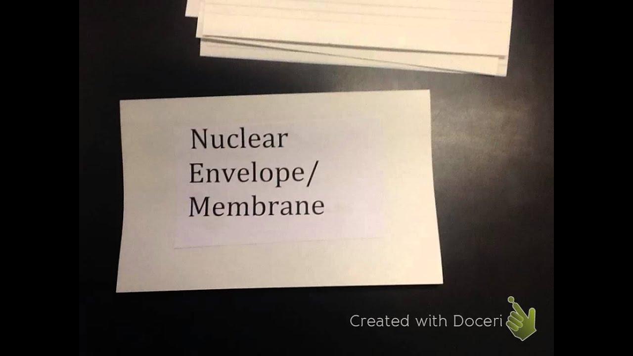 Prokaryotic Vs Eukaryotic Cells Card Game Youtube