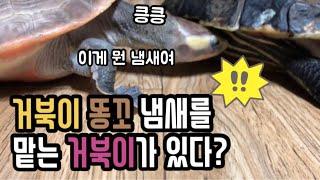 7살 차이나는 두 거북이가 만나면?(feat.옐로, 핑…