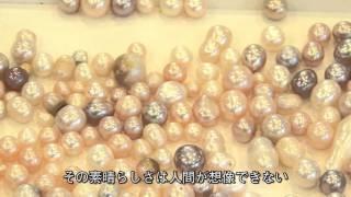 茨城県郷土工芸品~淡水真珠