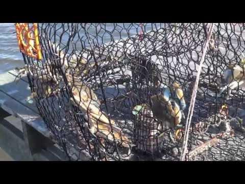 Crabbing on Mystic Island, N.J.