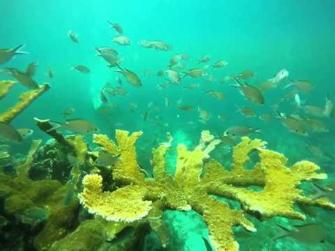 Dive in Dominican Republic 6