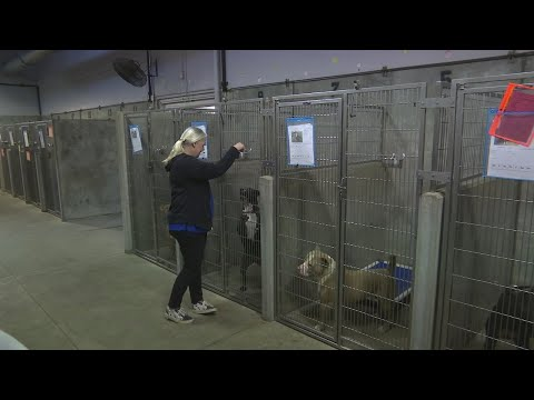 Update on dogs seized in what deputies are calling a 'puppy mill' in Fountain Inn