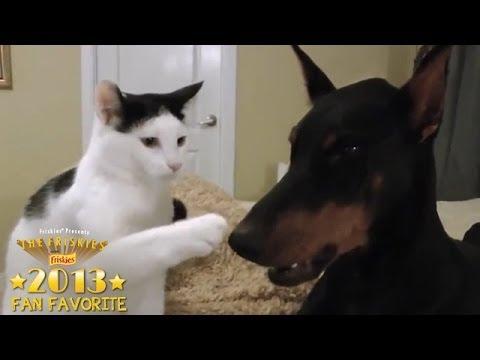 Fan Favorite & Rescue Cat Category Winner 2013: Pancake the Kitten and His Doberman
